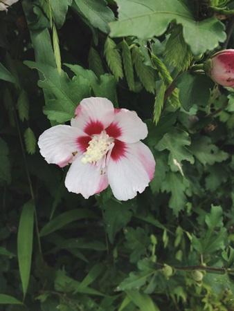 自然のお花