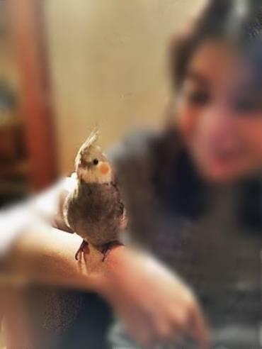 癒しの小鳥