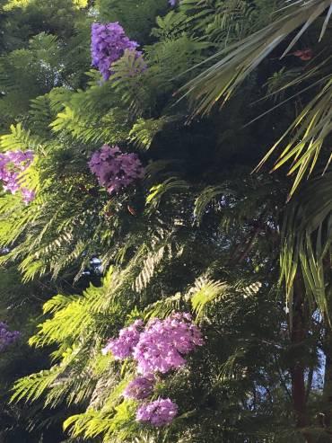 二ースの植物